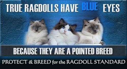 True Ragdolls Banner